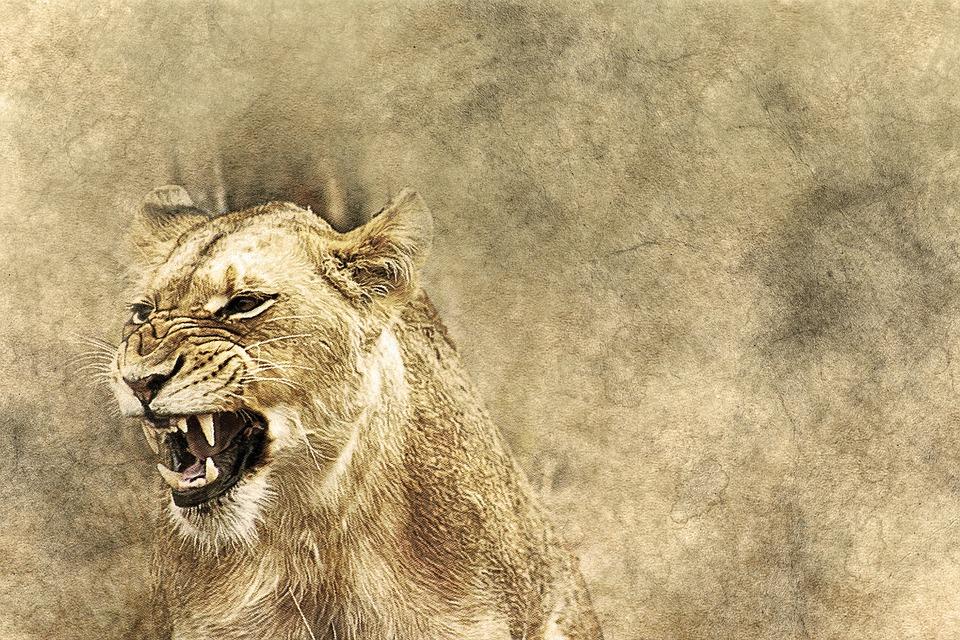Lioness, Animal, Roar, Art, Vintage, Nature