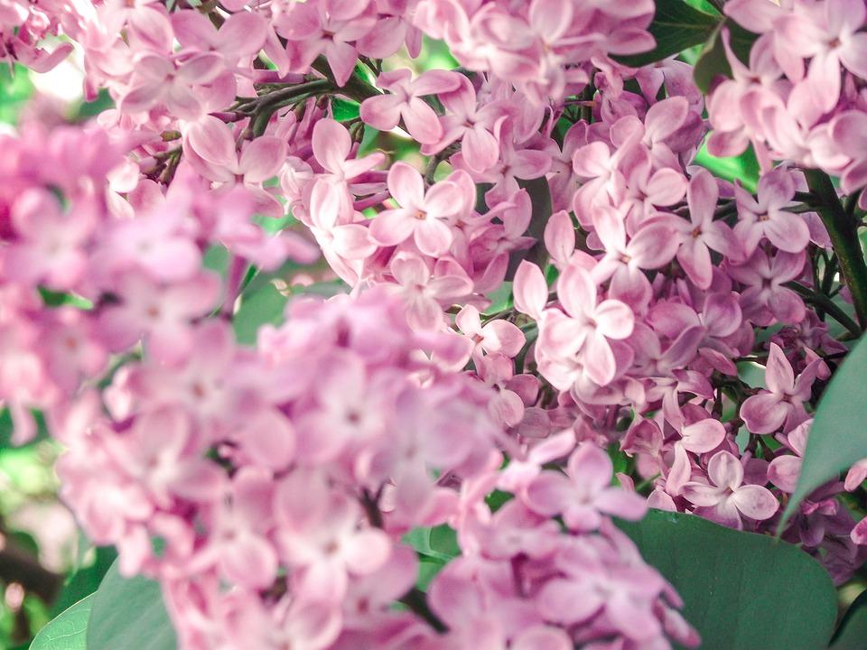 Flower, Pink, Vintage, Blossom, Bloom, Plant, Floristry