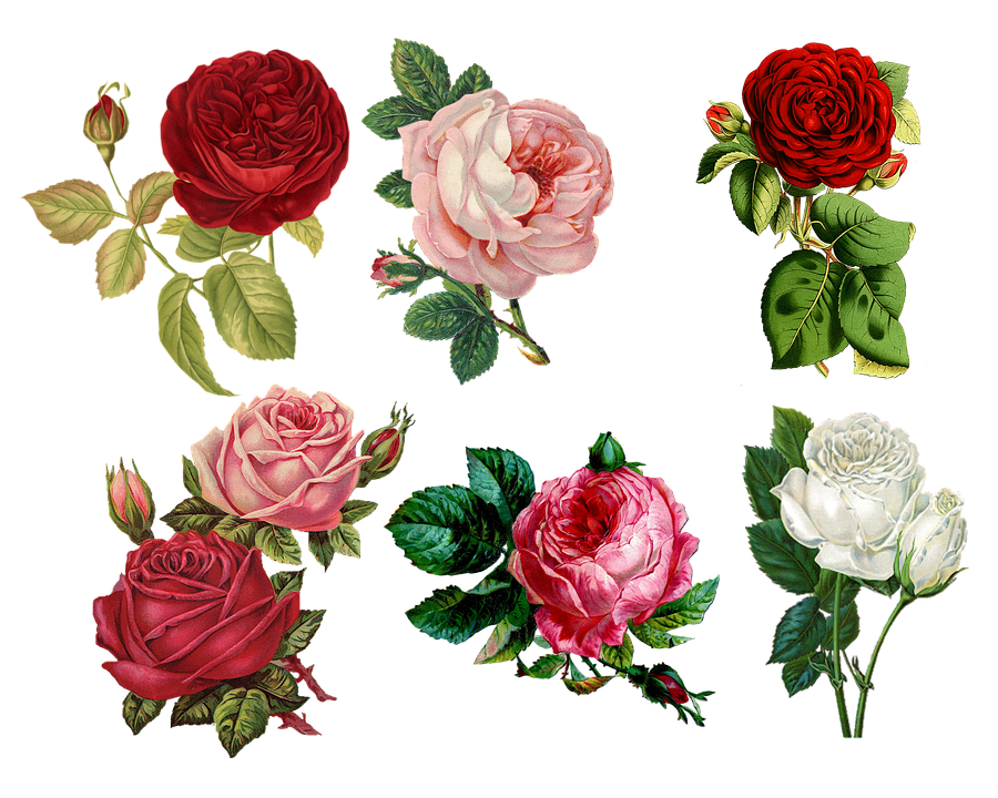Roses, Collage, Sheet, Vintage, Antique, Painted