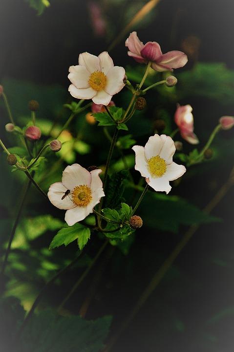 Plant, Nature, Garden, Summer, Sheet, Vintage, Bloom