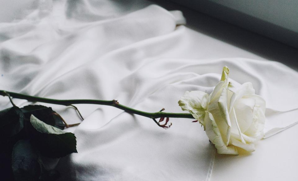 Rose, Vintage, White Rose