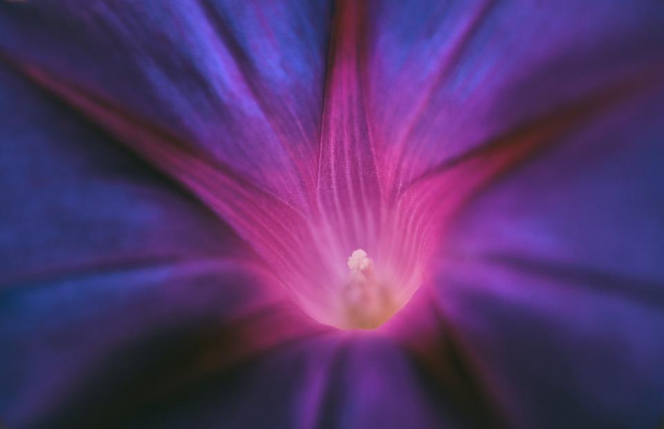 Purple Pageantry Winds, Blossom, Bloom, Flower, Violet