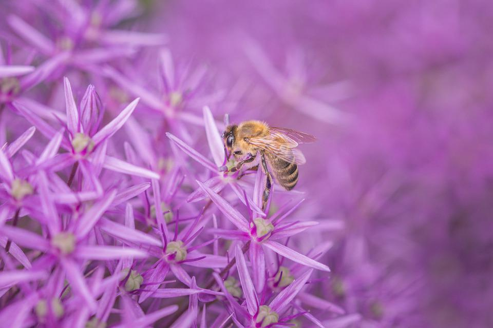 Bee, Flower, Purple, Insect, Macro, Plant, Violet