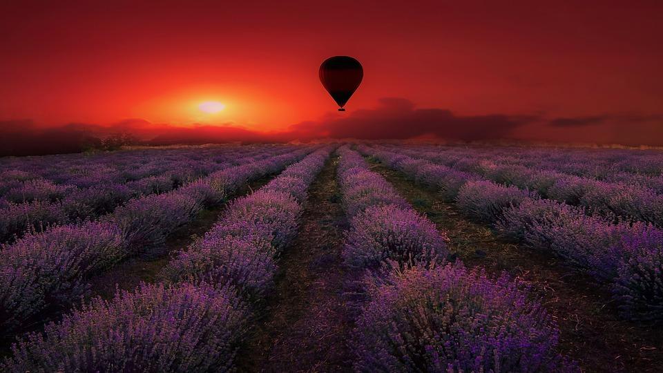 Lavender, Field, Purple, Provence, Nature, Violet
