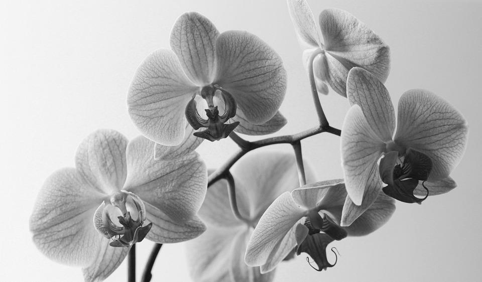 Flowers, Orchis, Violet, Blooming, Orchid, Nature