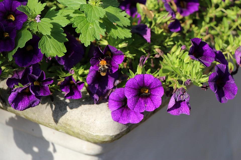 Purple Flower, Plant, Violet, Purple, Flower, Blossom