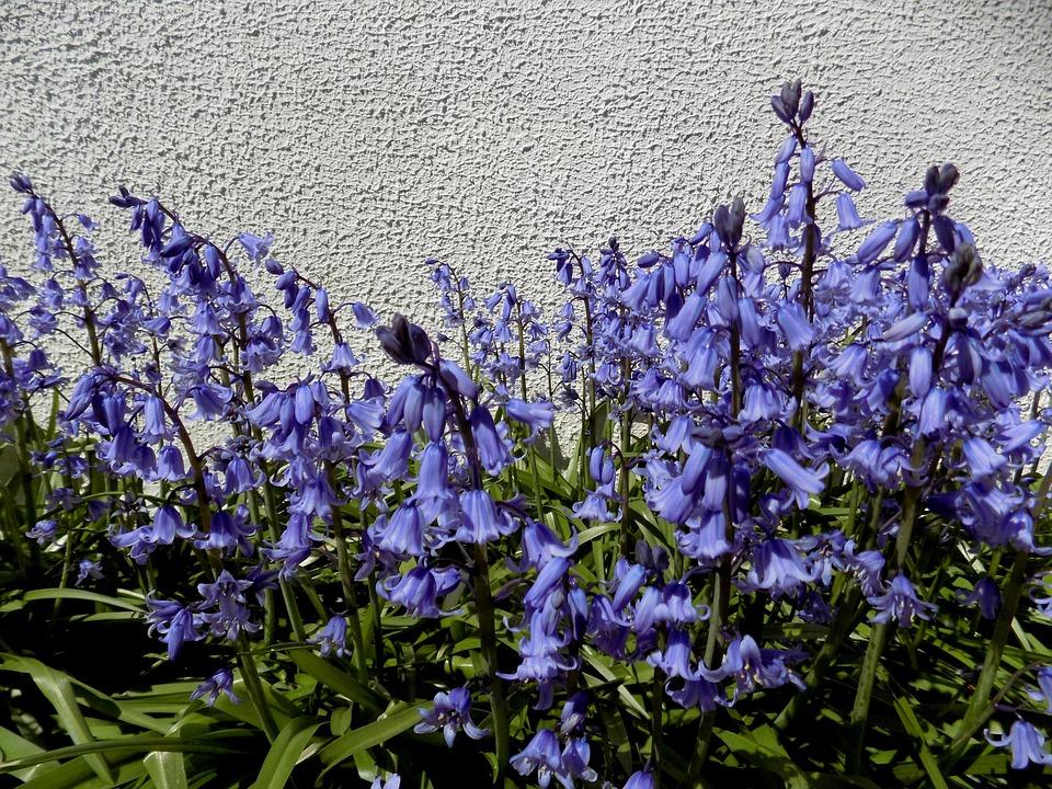 Flowers, Garden, Spring, Violet, Purple, Spring Flowers