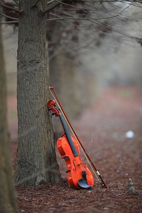 Violin, Musical Instruments, Taxodium Pine, Woodland