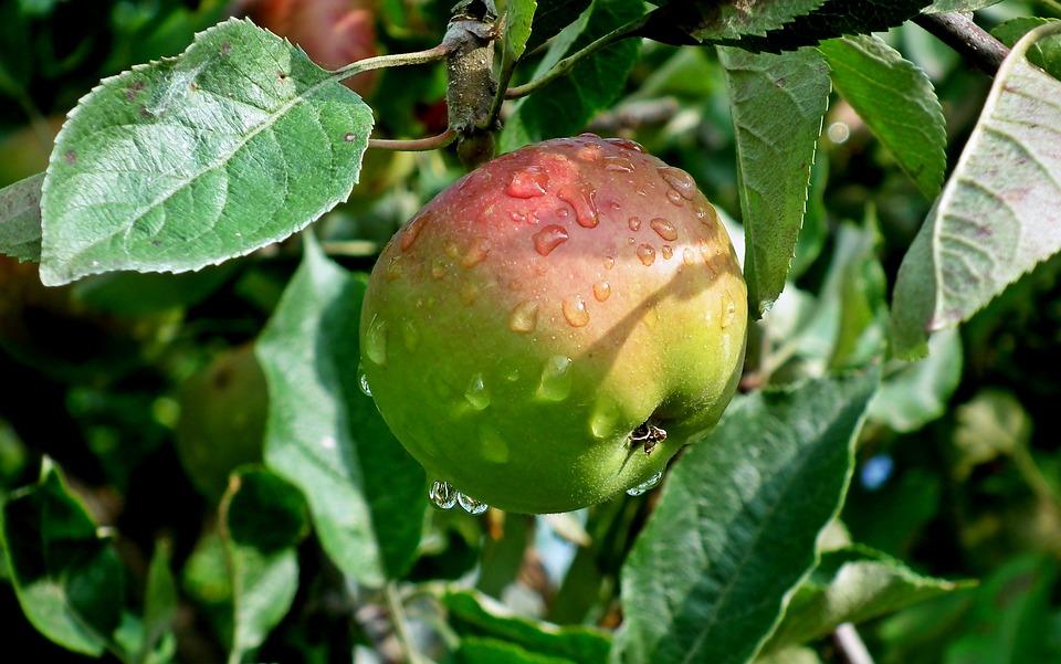 Apple, Fruit, Food, Health, Fresh, Closeup, Vitamins