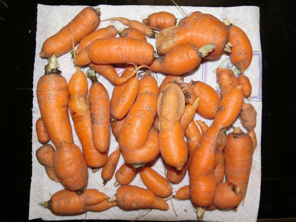 Carrots, Vegetables, Salad, Soup Greens, Vitamins