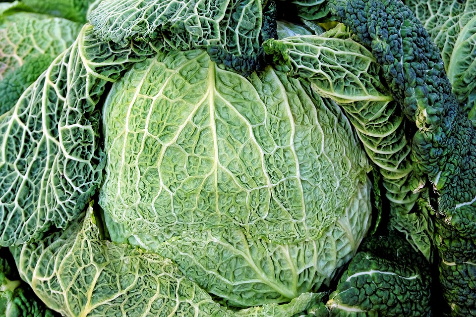 Savoy, Kohl, Green, Vegetables, Healthy, Vitamins