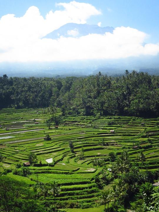 Bali, Rice Fields, Volcano