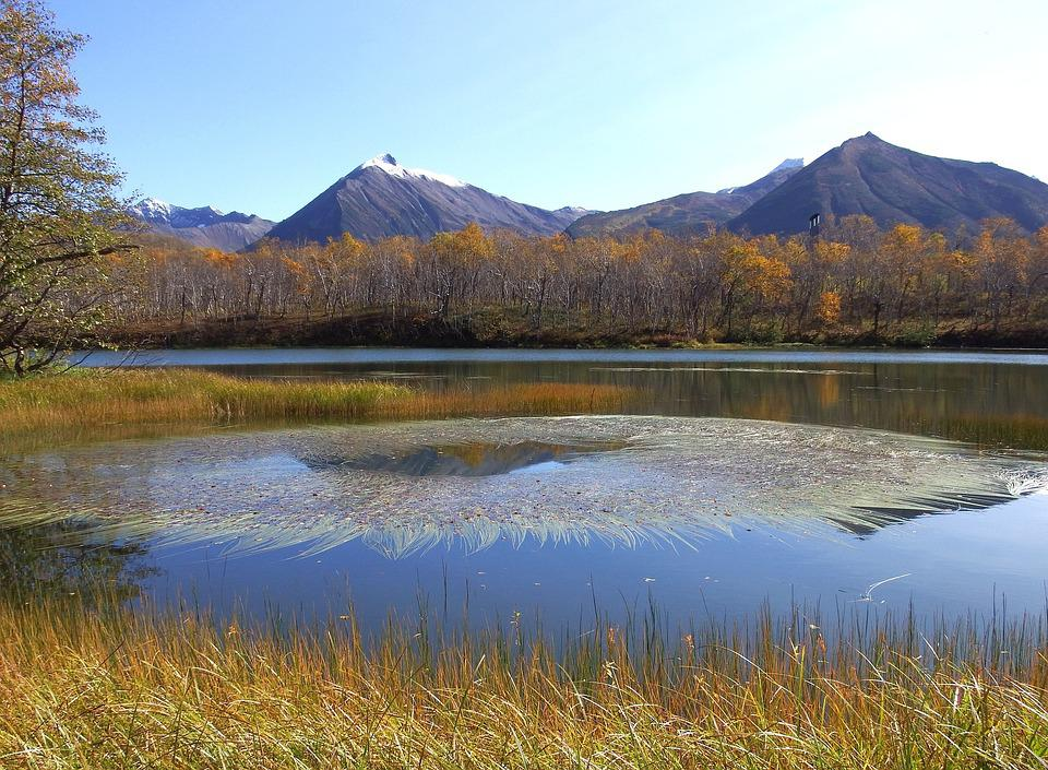 Mountains, Volcano, Lake, Forest, Reflection, Weed