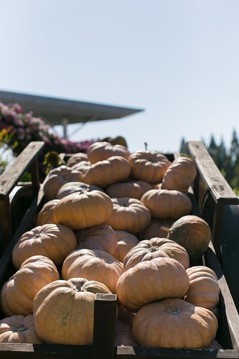 Pumpkin, Wagon, Agriculture