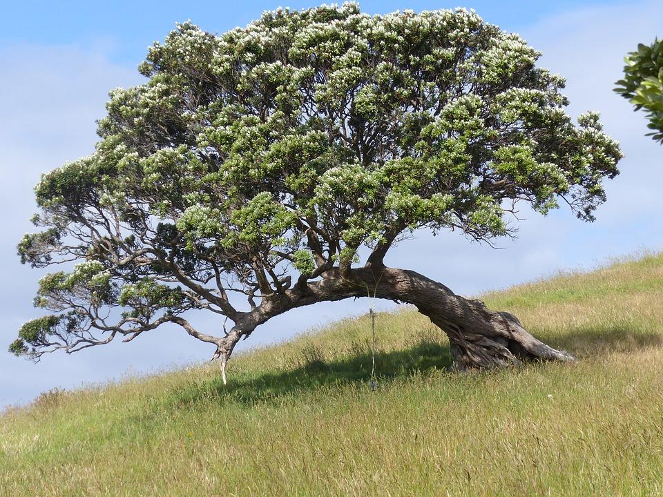 Waiheke Island, New Zealand, Tree, Nature, Solitude