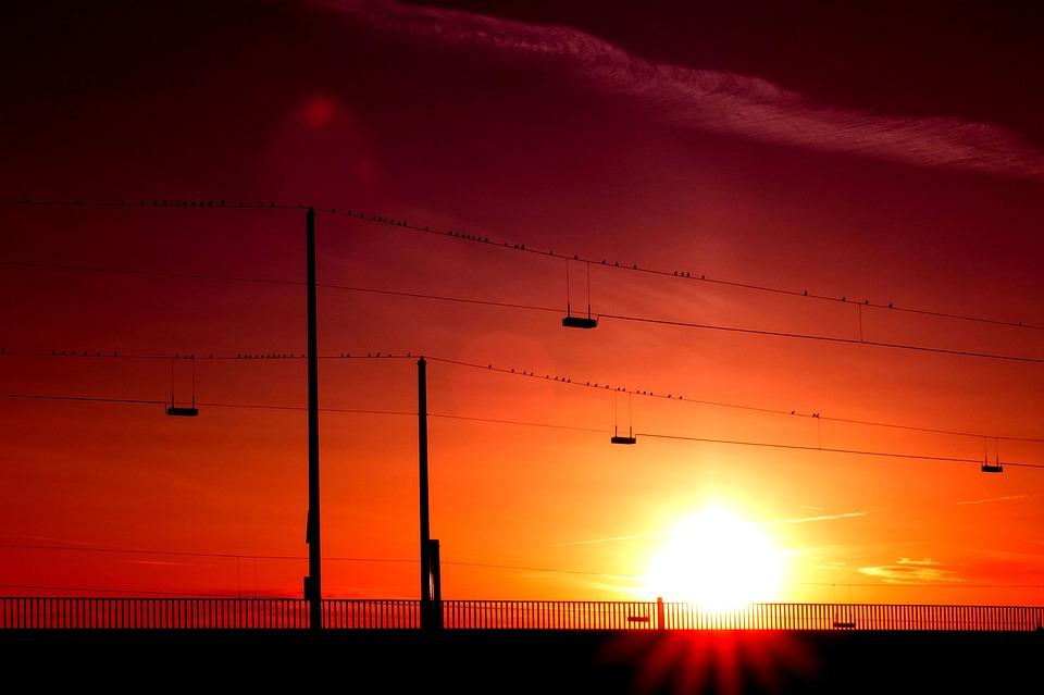 Birds, Wait, Bird Flight, Last Night, Sun, Sunset