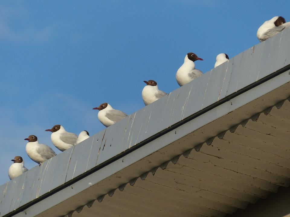Gulls, Animal, Birds, Wait, From The Series