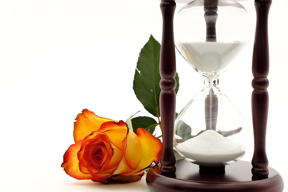 Hourglass, Egg Timer, Time, Wait, Rose, Rose Bloom