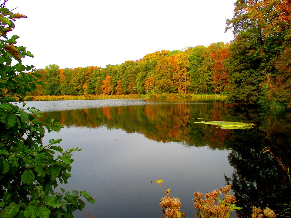 Lake, Forest, Waldsee, Nature, Landscape, Autumn Forest