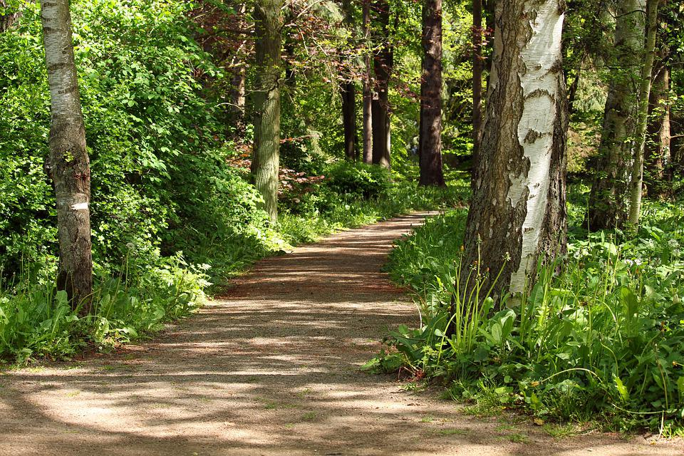 Forest Path, Walk In The Forest, Forest, Nature, Trees