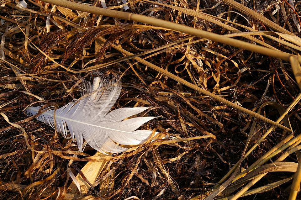 Walk On The Beach, Walk, Beach, Flotsam, White Feather