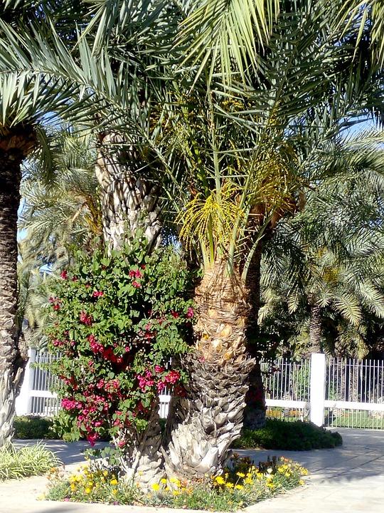 Elche, Park, Walk, Tourism, Palms, Plants, Nature