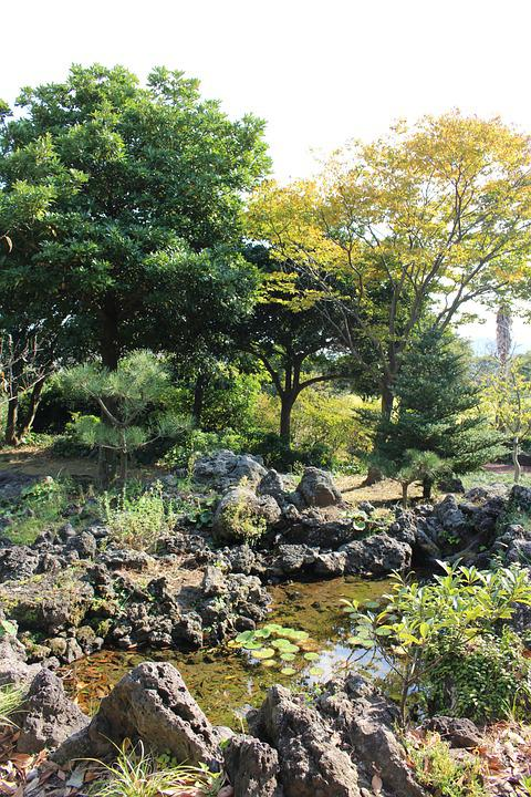 Walk, Garden, Landscape, Wood, Pond