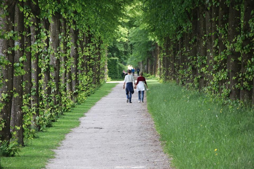 Away, Avenue, Trees, Walk, Nature, Tree Lined Avenue