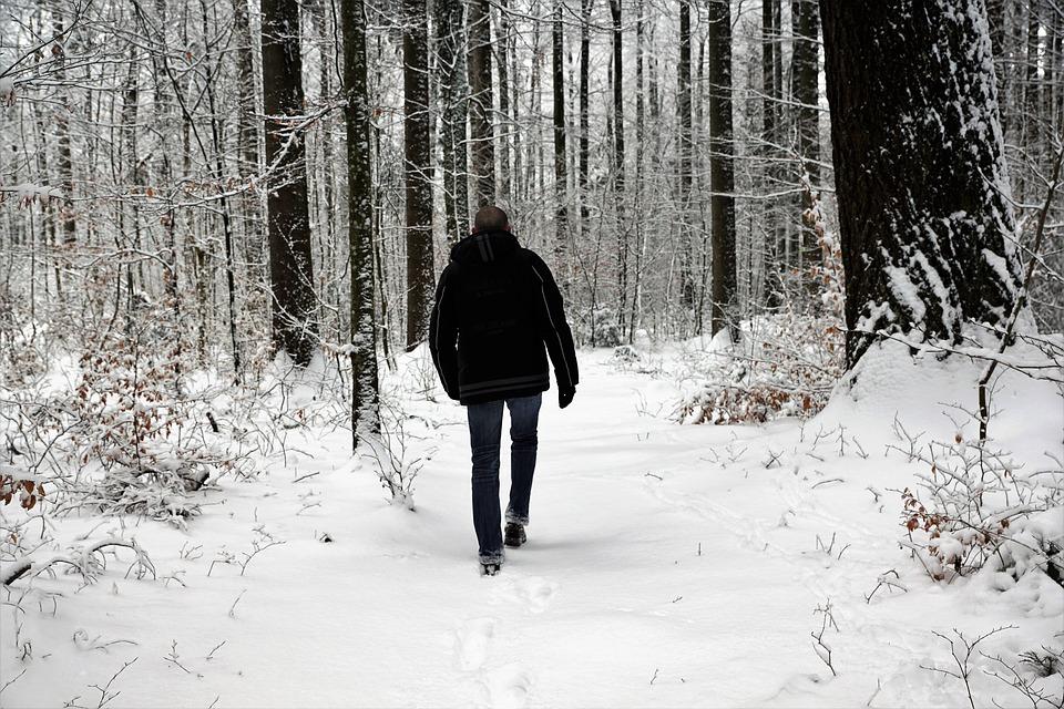 Fog, Autumn, Walk, Snow, Winter, Cold, Wood, Frost