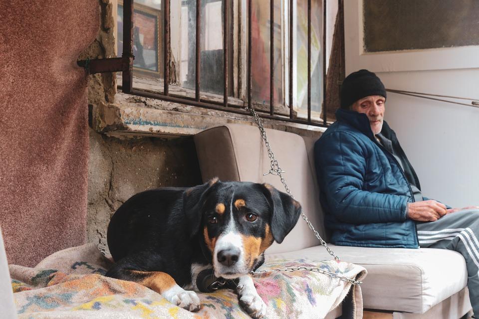 Old Man, Dog, Elderly, M, Old, People, Walking, Animal
