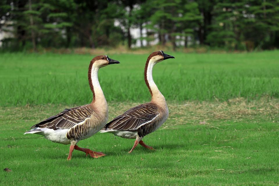 Big Wild Goose Pagoda, Walking, Park, Natural, Birds