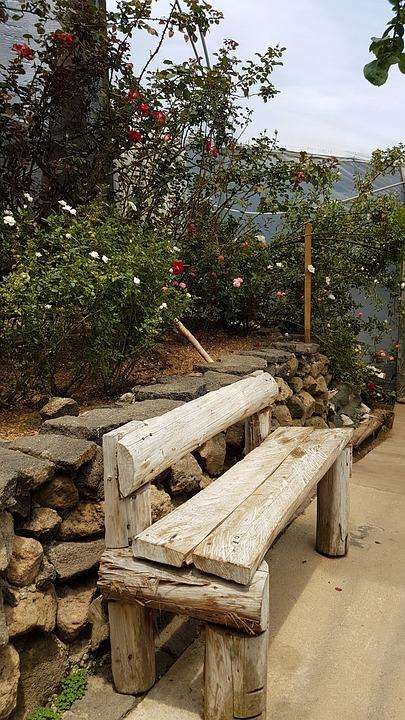 Bench, Walk, Path, Nature, Park, Walking, Garden, Plant