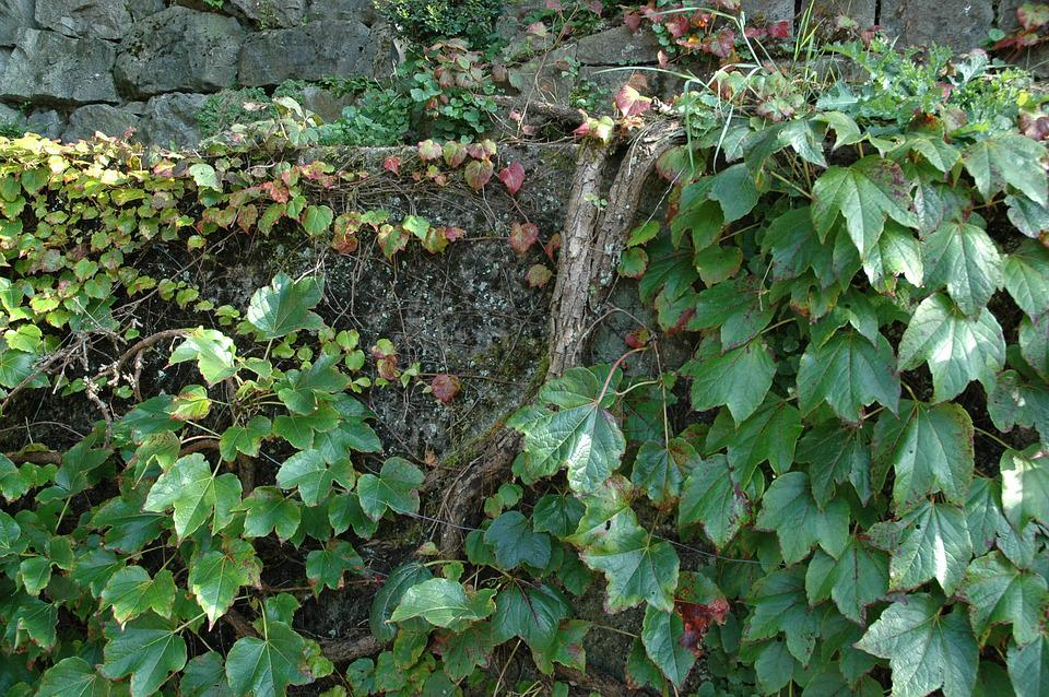 Autumn, Leaves, Wall