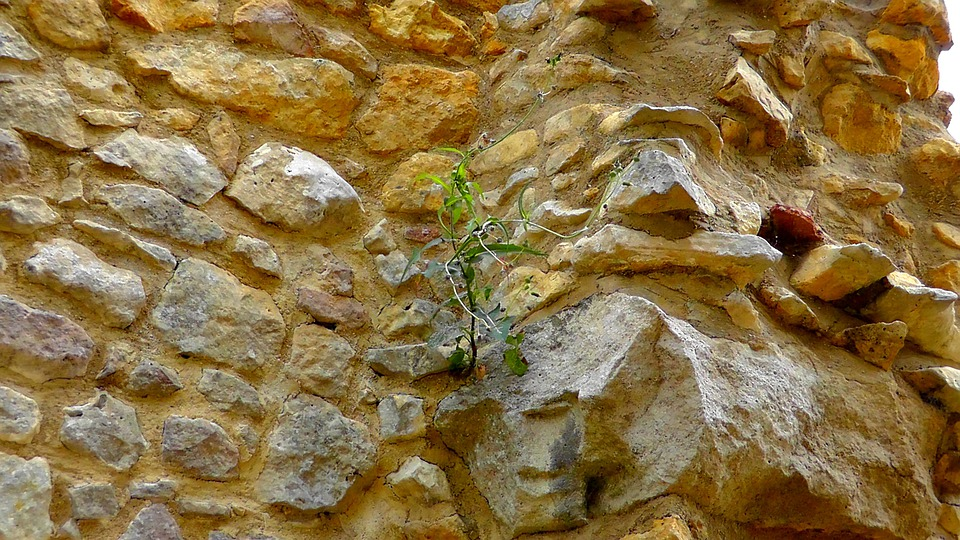 Stone Wall, Wall, Wallflower, Boulders