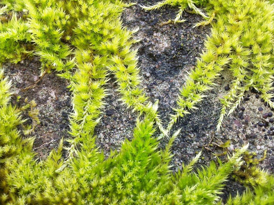 Moss, Green, Overgrown, Concrete, Macro, Climb, Wall