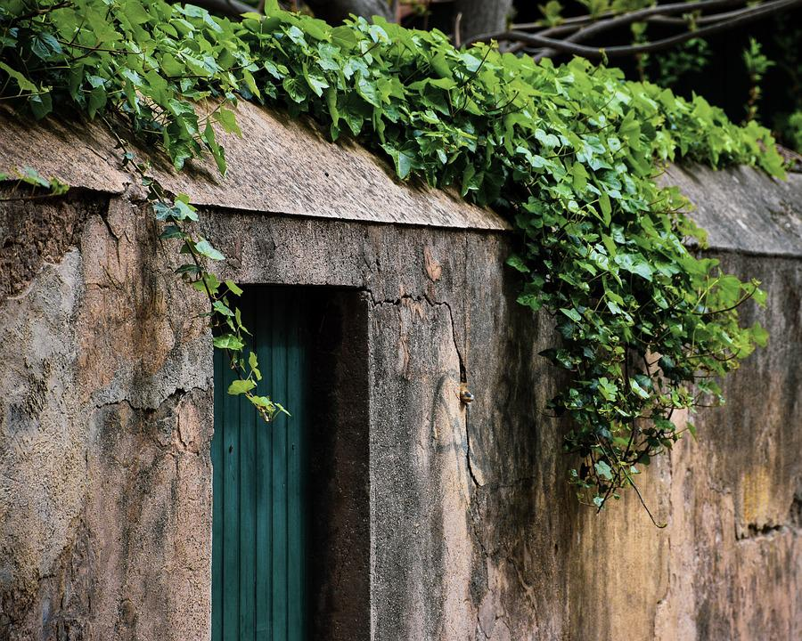 Wall, Exterior, Greenery, Ivy, Green, Foliage, Concrete