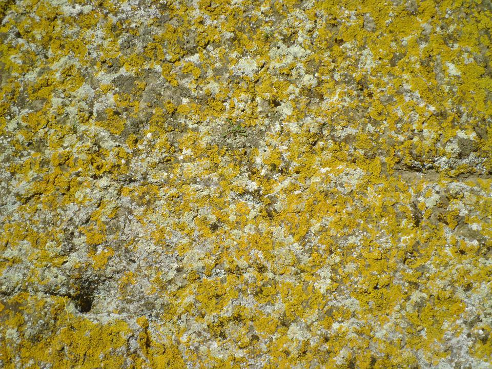 Background, Lichens, Wall, Rock, Yellow