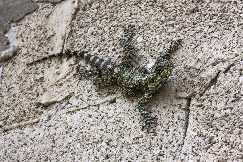 Nature, Stone, Reptile, Animal, Rock, Lizard, Wall