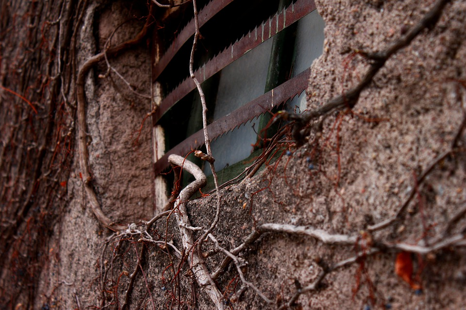 Vine, Plant, Window, Old, Adobe, Wall, Poverty