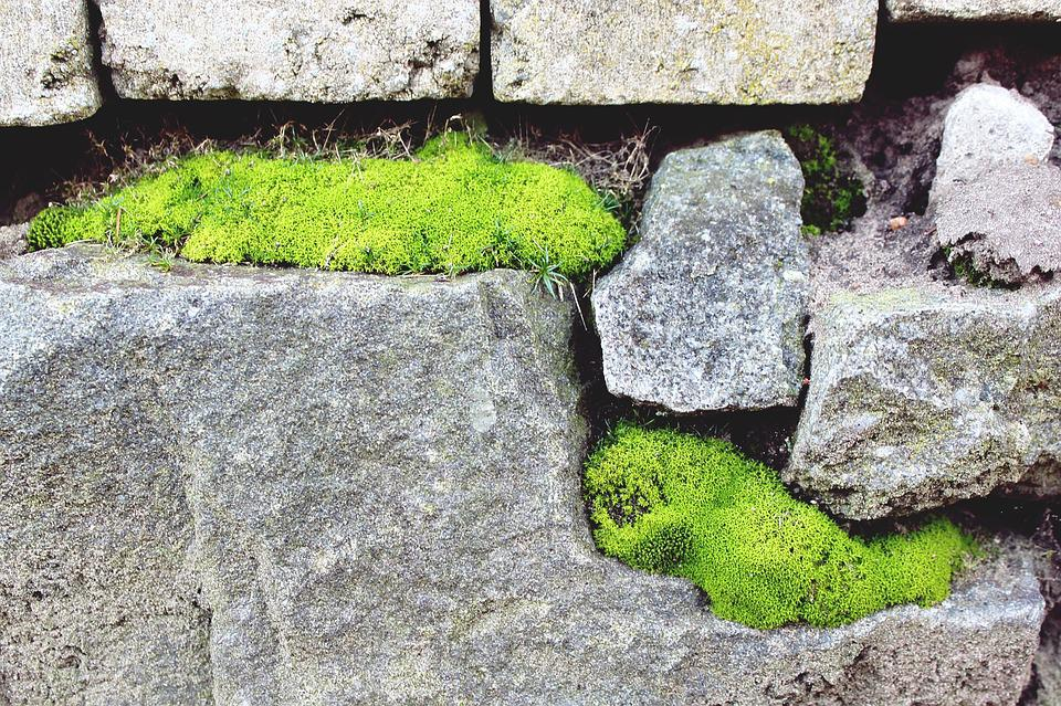 Stone, Stone Wall, Moss, Wall, Background