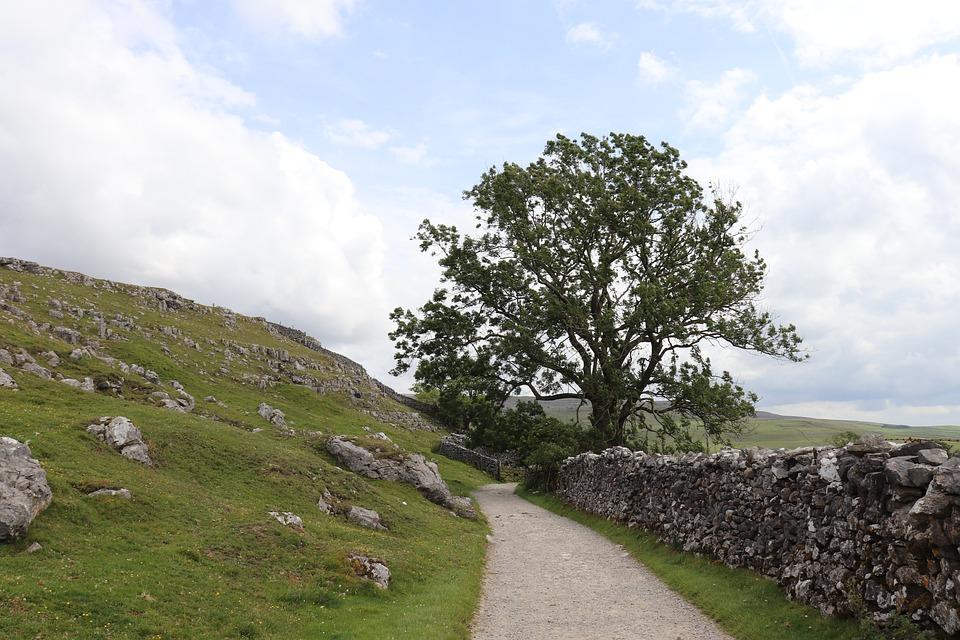 Away, Tree, Yorkshire, Wall, Dry Stone Wall, Road, Sky
