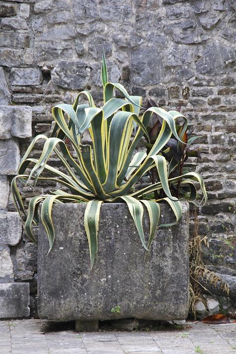 Plant, Wall, Wallflower