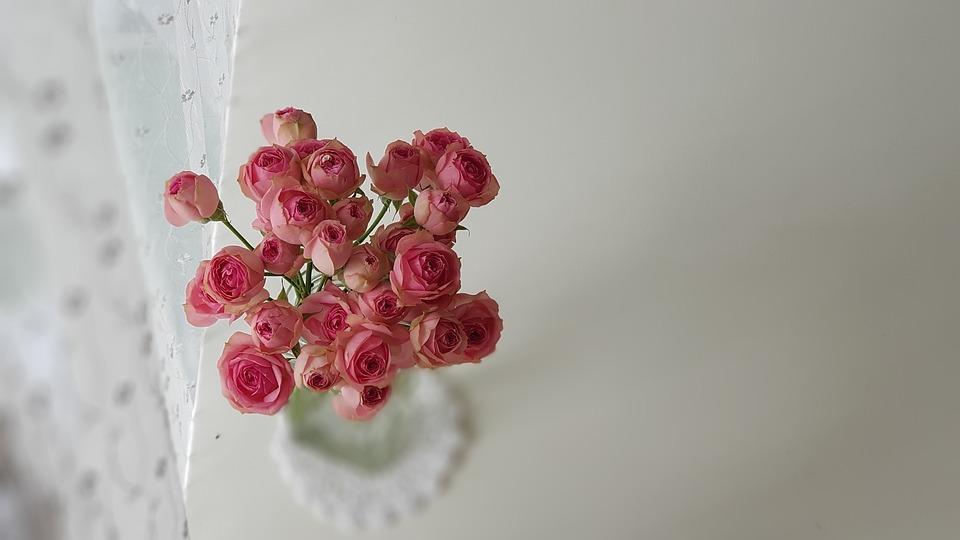 Nature, Flowers, Plants, Wallpaper, Color, Floral, Leaf