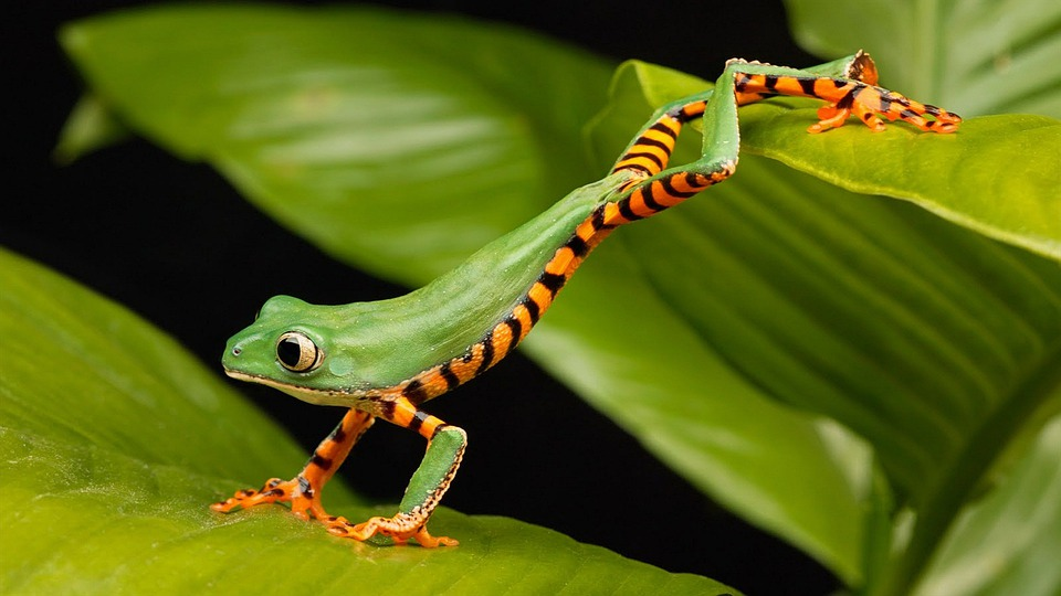 Animal, Nature, Forest, Frog, Wallpaper, Green Nature