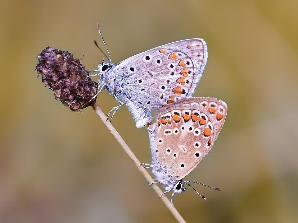 Kelebek, Butterfly, Macro, Böcek, Wallpaper
