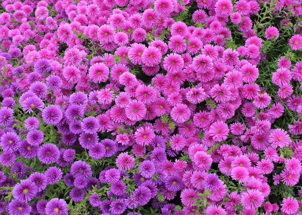 free photo wallpapers wallpaper background flowers screen max pixel