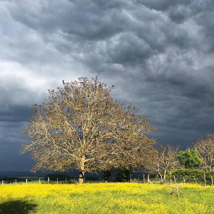 Tree, Sky, Walnut