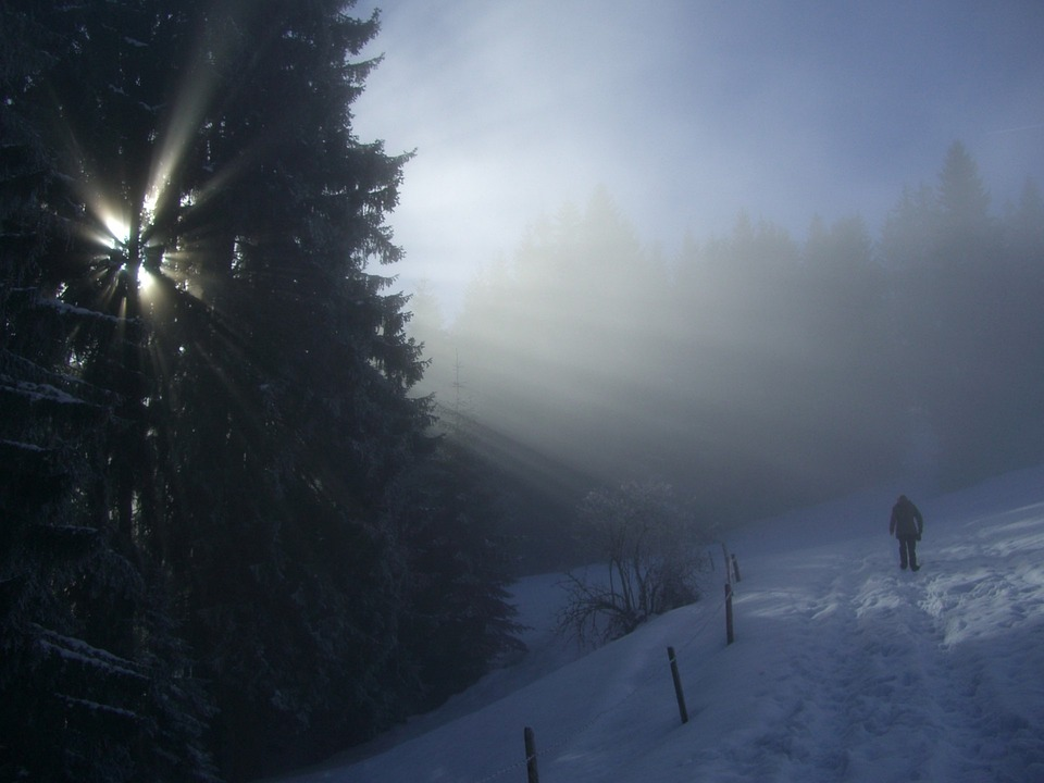 Winter, Fog, Firs, Sunbeam, Light, Snow, Wanderer