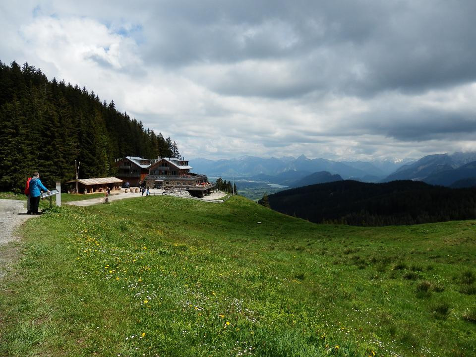 Mountain Meadow, Alpine Pointed, Wanderer