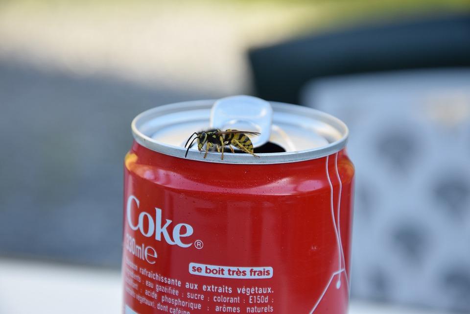 Wasp, Sugar, Coca, Drink, Coca-cola